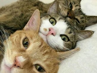 Cat 1 Cat 2 Cat 3 Challenge Is Storming On TikTok