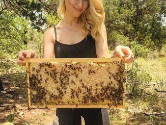 Who Is Bee Lady Aka Erika Thompson On Tiktok? Meet Beekeeper On Instagram